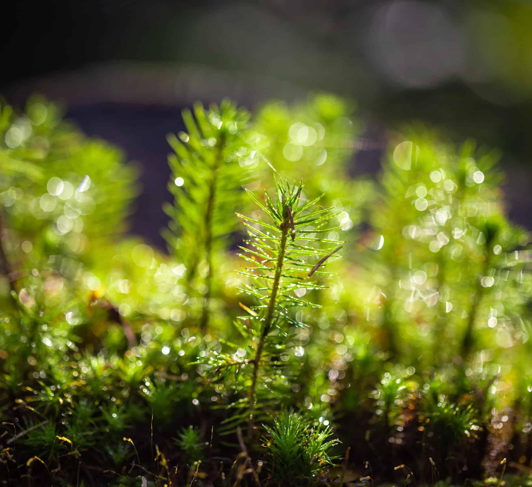 grönt i natur